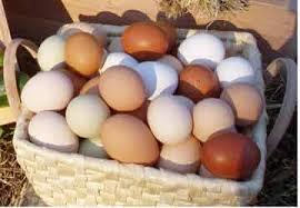 Farm Fresh Eggs For Sale